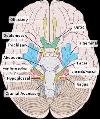هیپنوتیزم ، مغز و امواج مغزی هیپنوتیزم بیدار - دکتر حریری